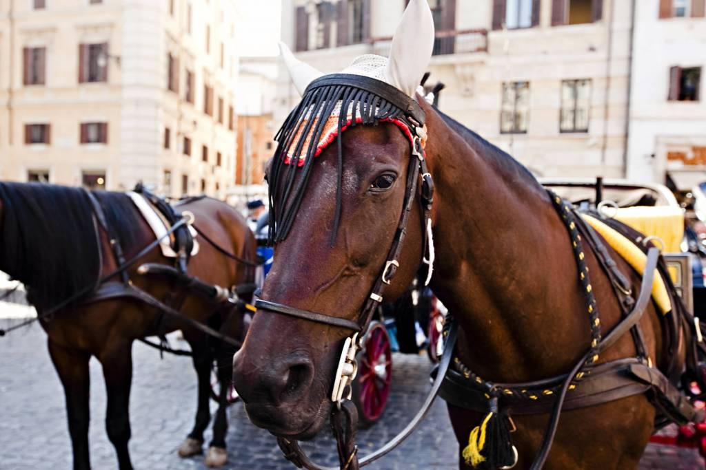horse in rome
