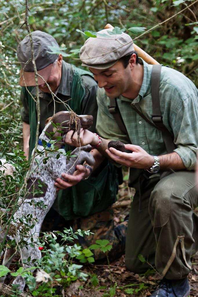 truffle hunting 2