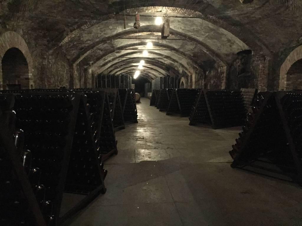 wine cellar piedmont