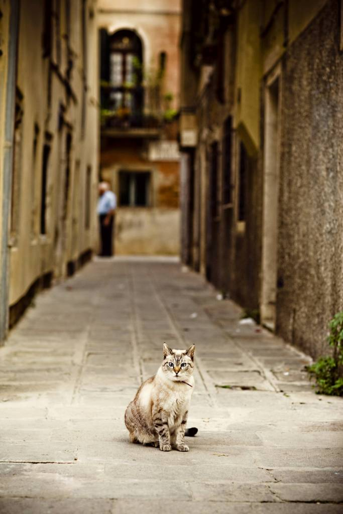 Cat in Venice alley