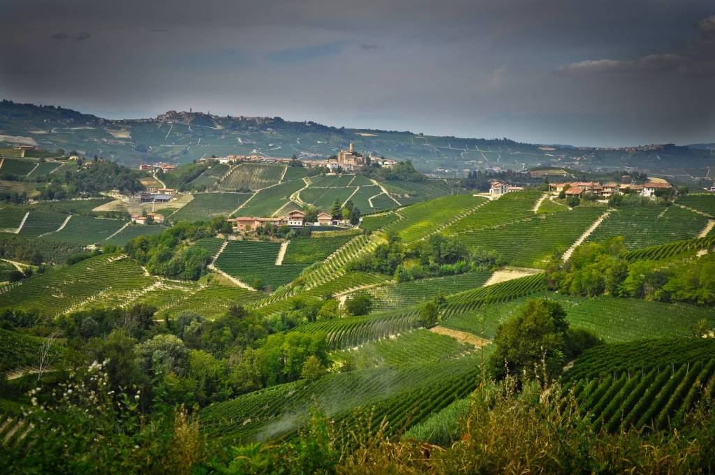The vineyards in Piedmont