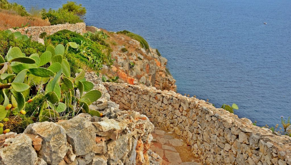 a view of cactus and the seaside in Salento, Puglia
